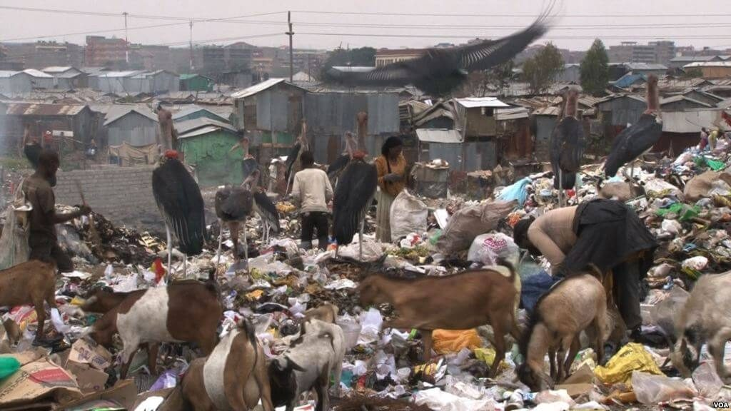 At the garbage dump in Nairobi's Viwandani neighborhood, people, goats and Marabou storks pick through the trash side by side. (Credit: S. Baragona/VOA)